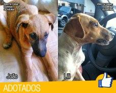 Fotos dos cães adotados- João e Lili